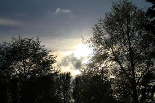 Abendstimmung Sunset Treetop Canopy