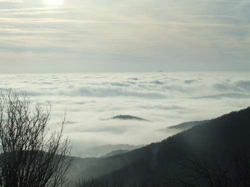 Above The Clouds Three Stone Beech Hg Fog Nature