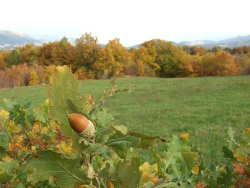 Acorn Acorns Nature Autumn Spring Forest