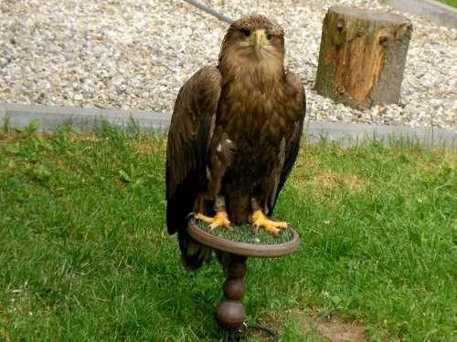 Adler Bird Wild Bird Conservation Park