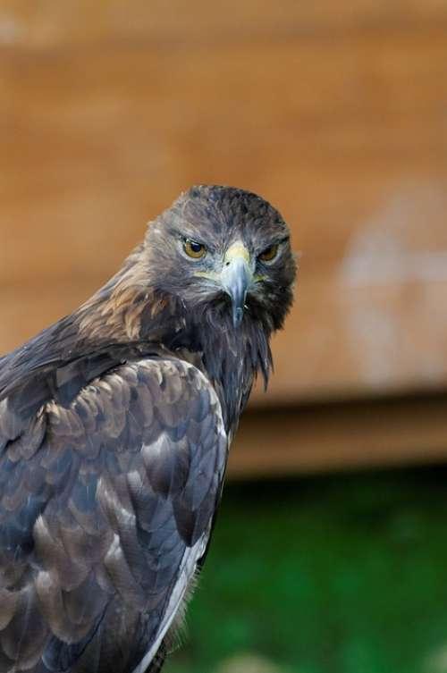Adler Bird Of Prey Raptor Spotting Portrait