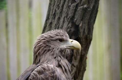 Adler Animal Bird