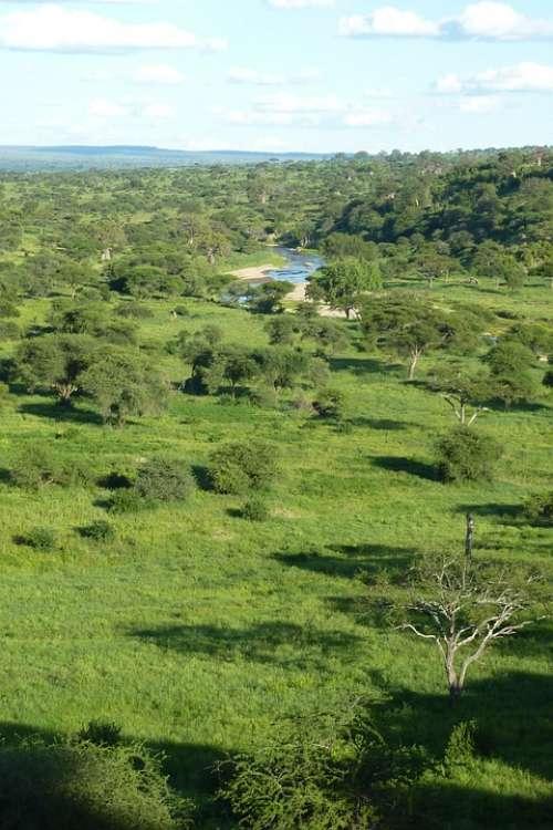 Africa Tanzania National Park Tarangire Trees
