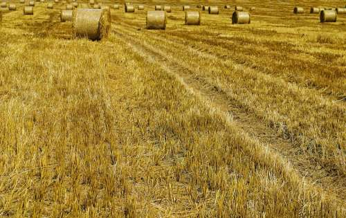 Agricultural Agriculture Autumn Background Bale
