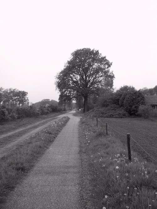 Agricultural Nutzweg Graze Achterhoek Holland