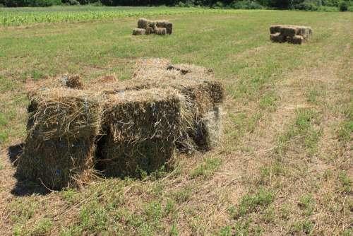 Agriculture Alfalfa Bales Square Stubble