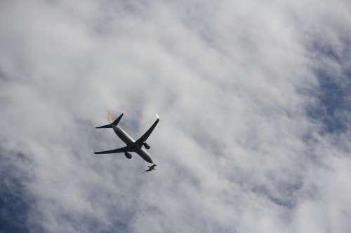 Aircraft Bird Flight