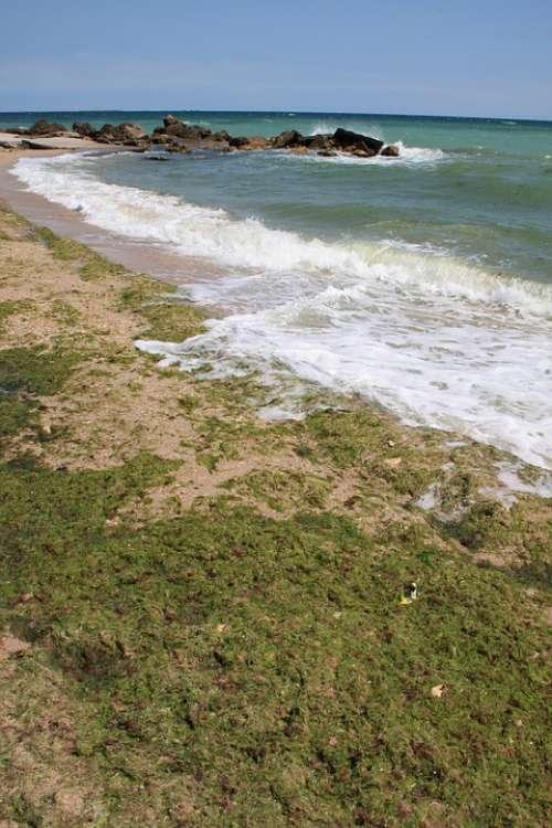Algae Beach Covered Green Sea Seaweed Water