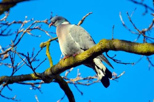 Alive Alone Animal Avian Beak Beautiful Bird