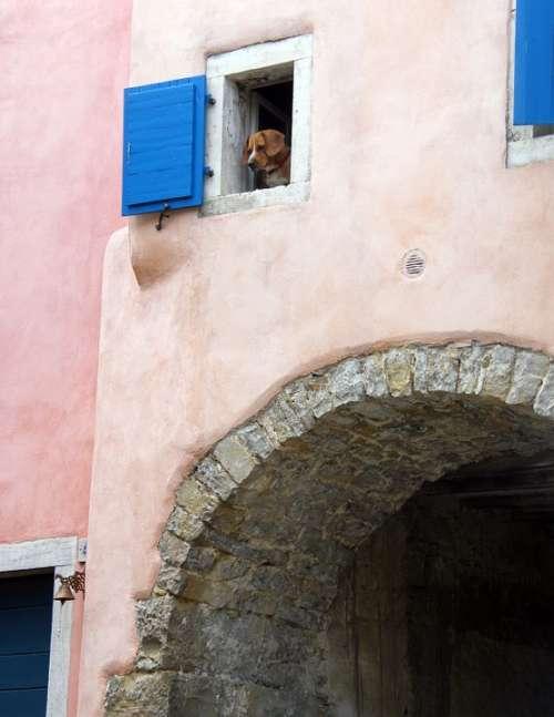 Alley House Old Croatia Gorenj Dog Window