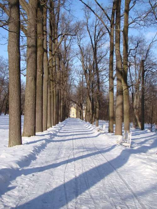 Alley Trees Track Snow Winter Shadow
