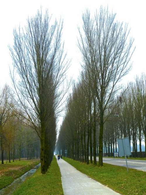 Alley Tree Lined Trees Perspective Road Travel