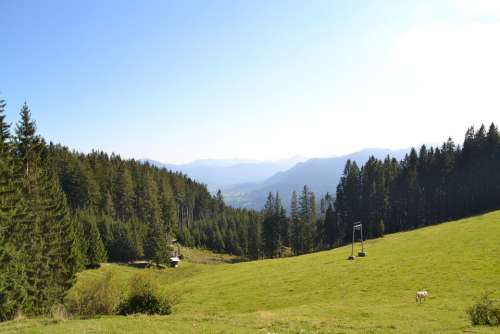Alpine Mountains Meadow Pasture