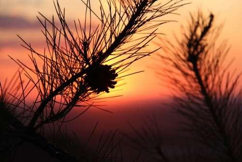 Alxa Sunset Echinacea Inner Mongolia The Scenery