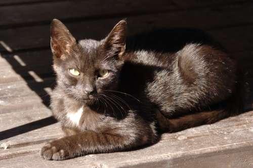 Animal Cat Eyes Black Light Shadow