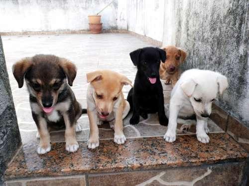 Animal Dog Puppy