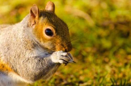Animal Squirrel Mammal Paw Tail Close-Up Bushy