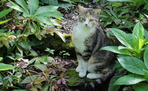 Animal Cat Anxious Curious Hidden Cat'S Eyes