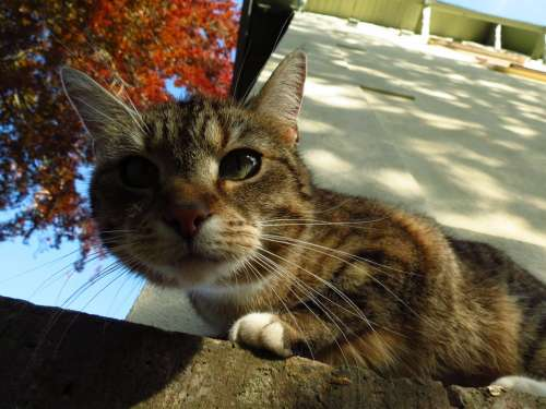 Animal Cat Close-Up Pet Face Cute Cat Face