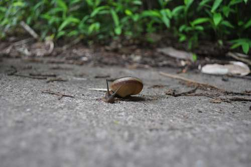 Snail Animal Forest