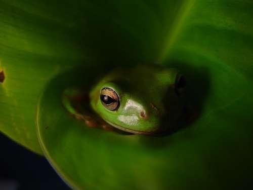 Animal Frog Amphibians Reptiles Animals Fauna