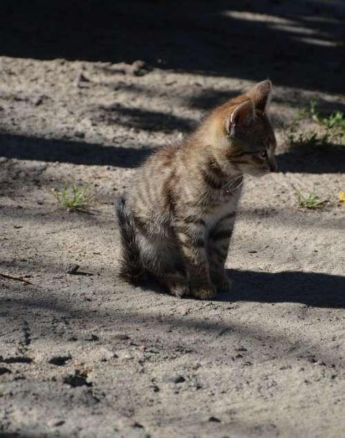 Animal Cat Kitten A Young Kitten