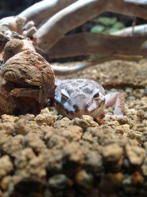 Animal Lizard Smile Wink Cute