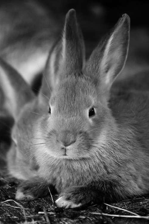 Animal Bunny Cute Ear Ears Easter Fluffy Fur