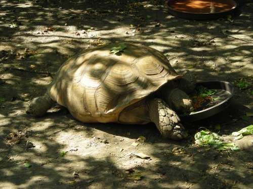 Animal Turtle Water