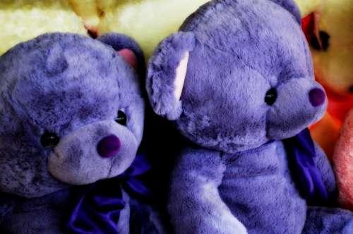 Animals Bears Bear Toy Stuffed Stuffed Animal