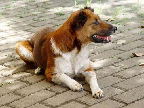 Animals Dog Mix