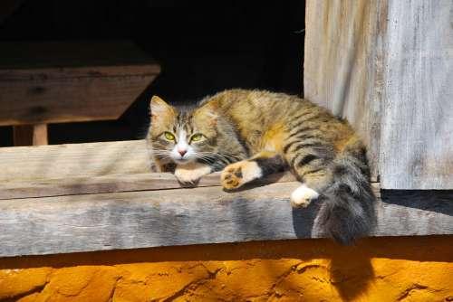 Animals Cat Observation