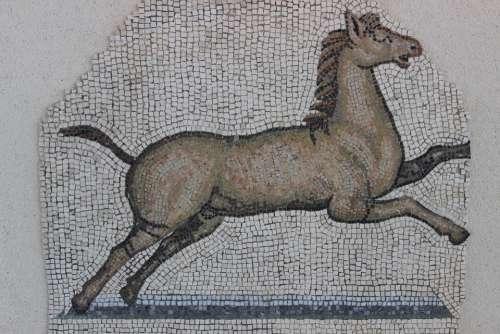 Antique Mosaic Rome Vestige Archaeology Horse