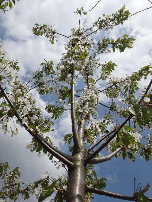Apple Blossom Blossom Bloom Spring Nature Tree