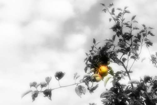 Apple Tree Autumn Apple Tree Fruit Season Ripe