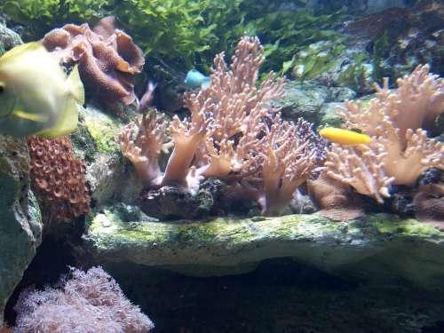 Aquarium Spain Tropical Fish