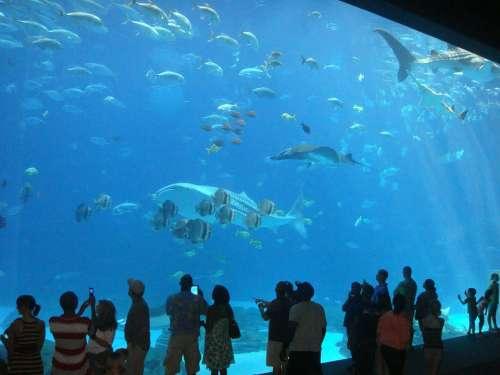 Aquarium Fish Atlanta