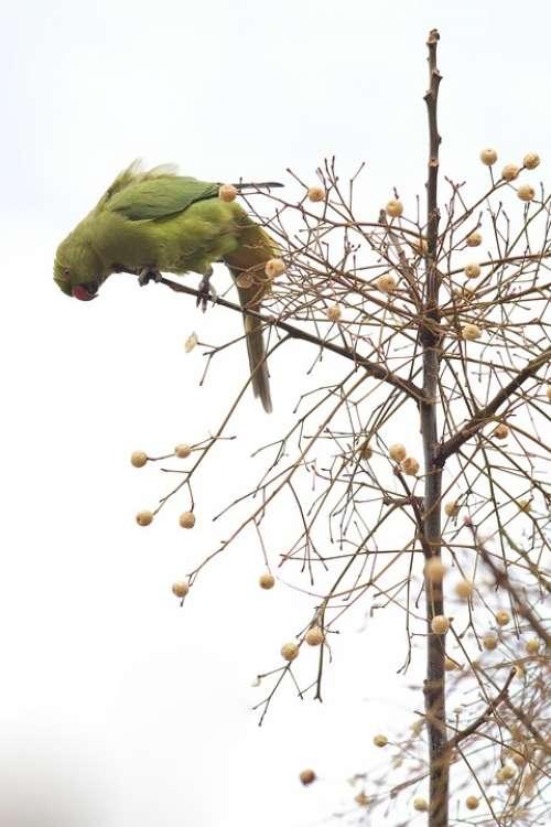 Ara Parrot Bird Branch Tree Green Animal Nature