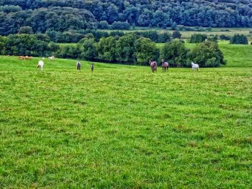 Ardennes France Landscape Scenic Hdr Nature