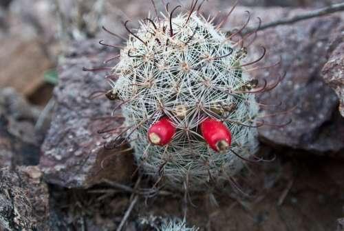 Arizona Tucson Desert Cactus Landscape Nature