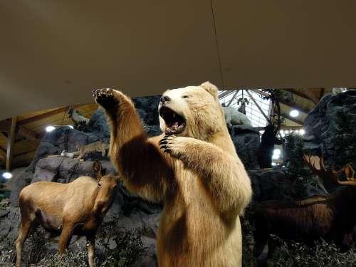 Artic Bear Polar Bear Bear Animals Models Exhibit