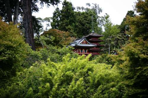 Asian Nature Japanese Forest Japanese Garden Woods