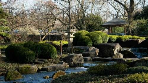 Asian Nature Japanese Japanese Garden Plant