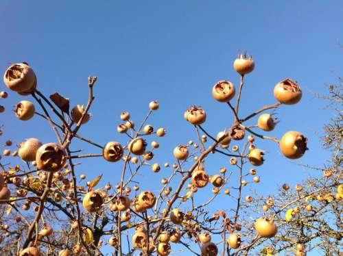 Asperln Autumn Fruits Nature Harvest Yellow Brown
