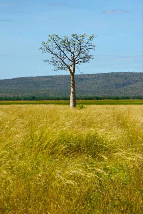 Australia Tree Outback Nature Rural Wilderness