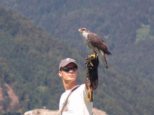 Austria Carinthia Eagle Show At Castle