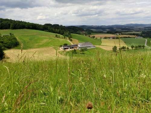 Austria Alm Meadow Landscape Pasture Green