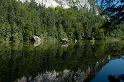 Austria Forest Trees Woods Lake Water Reflections