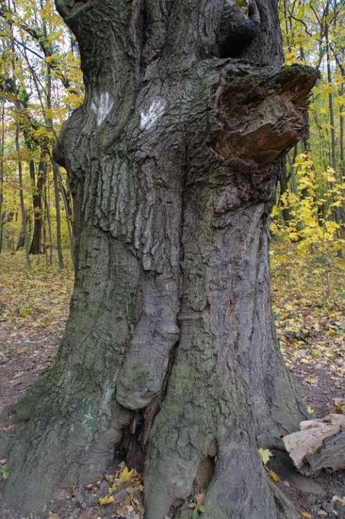 Autumn Log Root Leaves Tree Root Nature