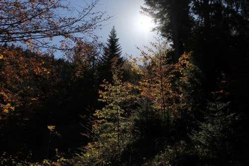 Autumn Landscape Tree Trees